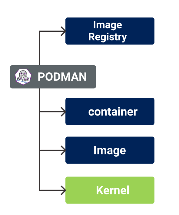 Podman works with runC container runtime processes in Linux kernel without daemon process.